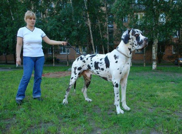 http://cs215.vkontakte.ru/u11877670/35585473/x_bcdf53be.jpg